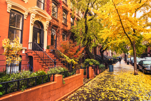 Fall Leaves Collection, BK Reader, fall leave collection, compost, Department of Sanitation, fall leaf collection schedule, Brooklyn Community Board 5, Brooklyn Community Board 9, Brooklyn Community Board 17, Brooklyn Community Board 14