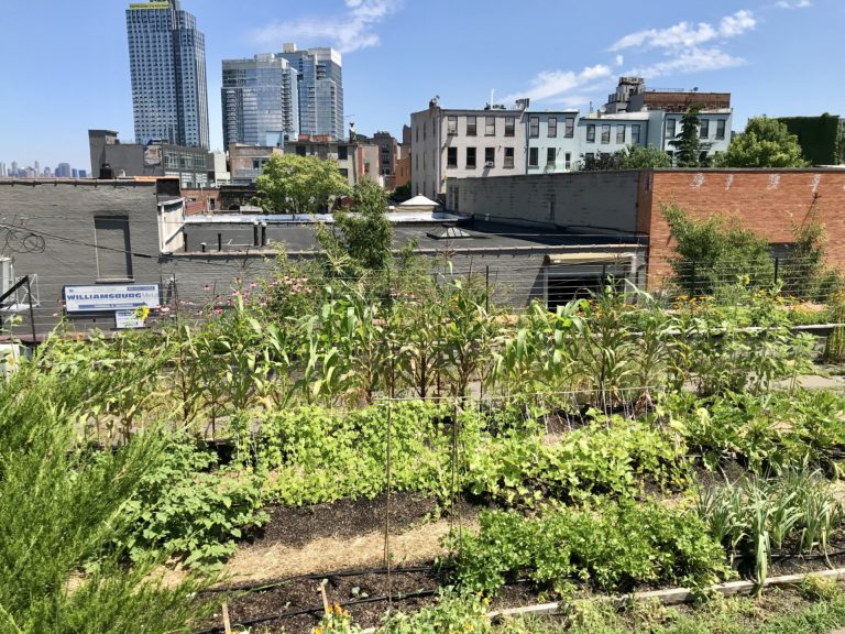 Vice rooftop garden in Williamsburg