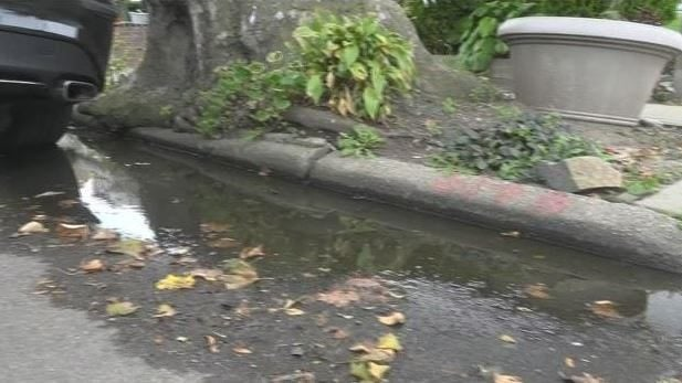 East Flatbush residents: Local street flooding, tree's large roots making area dangerous