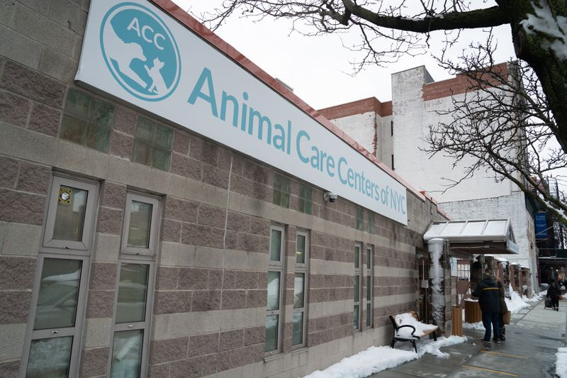 NYC councilman calls for expedited vaccine for animal shelter workers after Manhattan facility shut down by COVID